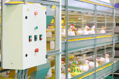 Demonstration of industrial incubator with toy chickens Stock Images