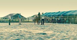 Demostración árabe del caballo imagen de archivo libre de regalías