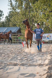 Demostración árabe del caballo imágenes de archivo libres de regalías