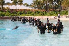 Demostración Atlantis Bahamas del delfín Imágenes de archivo libres de regalías