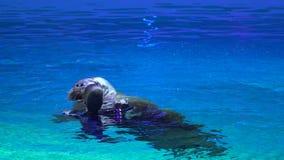Demostración de Dolphinarium, del delfín y funcionamiento en parque del agua Funcionamiento de la demostración del león marino du almacen de metraje de vídeo
