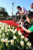 Demostración de flor de Hong-Kong 2012 Imagen de archivo