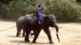 Demostración de fricción del tronco de árbol del elefante para el turista metrajes