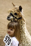Demostración de la alpaca de Great Western Imagenes de archivo