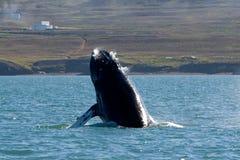 Demostración de la ballena Imagen de archivo libre de regalías