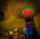Demostración de la luz de la rapsodia del jardín de la arboleda de Supertree Foto de archivo libre de regalías