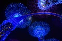 Demostración de la luz de la rapsodia del jardín en la arboleda estupenda del árbol Imagenes de archivo