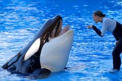 Demostración de la orca Imagen de archivo libre de regalías