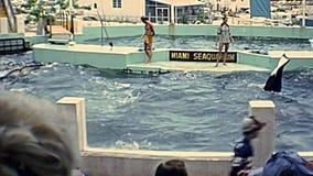 Demostración de la orca de Miami almacen de metraje de vídeo