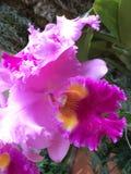 Demostración de la orquídea del jardín botánico de Missouri foto de archivo libre de regalías