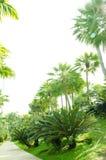 Demostración de la palma en la flora real 2011 en el chiangmai. Foto de archivo libre de regalías