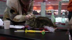 Demostración de los animales domésticos almacen de video