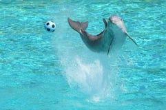 Demostración de los delfínes Imagen de archivo