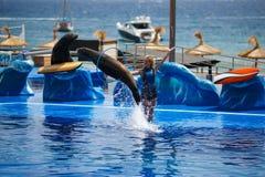 Demostración de los delfínes en Palma de Mallorca Imágenes de archivo libres de regalías