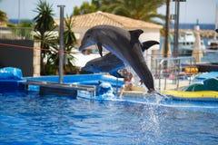 Demostración de los delfínes en Palma de Mallorca Imagenes de archivo