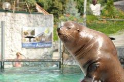 Demostración de los sellos en parque zoológico Imagenes de archivo