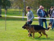 Demostración de perro Fotografía de archivo