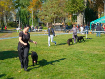 Demostración de perro Imagen de archivo libre de regalías