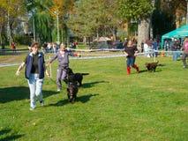 Demostración de perro Fotografía de archivo libre de regalías