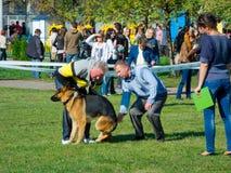 Demostración de perro Fotos de archivo libres de regalías