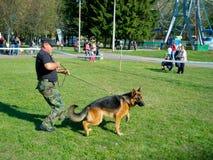 Demostración de perro Foto de archivo