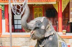 Demostración del baile del elefante en el parque zoológico en Tailandia Foto de archivo