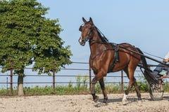 Demostración del caballo Fotos de archivo libres de regalías