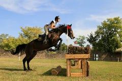 Demostración del caballo de Karpatia Fotos de archivo