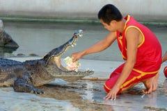Demostración del cocodrilo en la granja y el parque zoológico del cocodrilo de Samutprakarn Fotos de archivo