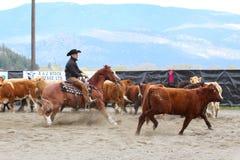 Demostración del corte del caballo Foto de archivo
