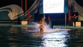 Demostración del delfín fotos de archivo