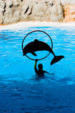 Demostración del delfín Foto de archivo