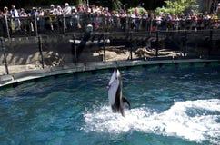 Demostración del delfín del acuario de Vancouver Fotos de archivo