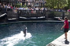 Demostración del delfín del acuario de Vancouver Fotografía de archivo