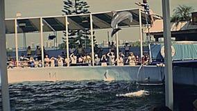 Demostración del delfín de Miami almacen de metraje de vídeo
