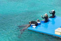 Demostración del delfín en el acuario de Curaçao Foto de archivo libre de regalías