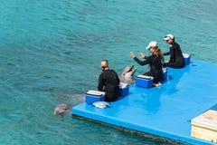Demostración del delfín en el acuario de Curaçao Fotos de archivo libres de regalías