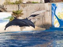 Demostración del delfín en el acuario Madrid España del parque zoológico foto de archivo