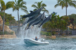 Demostración del delfín en el mundo Gold Coast Australia del mar Fotografía de archivo