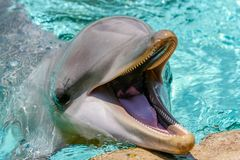 Demostración del delfín en el mundo del mar fotografía de archivo libre de regalías