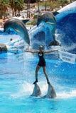Demostración del delfín - excepto el mensaje de los mares Imagenes de archivo