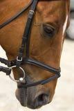 Demostración del dressage del caballo Fotografía de archivo libre de regalías