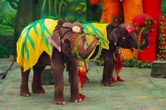 Demostración del elefante Imagen de archivo libre de regalías