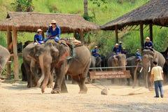 Demostración del elefante en el campo del elefante de Maesa, Chiangmai, Tailandia en abril Foto de archivo libre de regalías