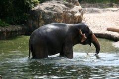 Demostración del elefante - parque zoológico de Singapur, Singapur Foto de archivo