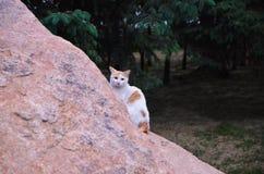 Demostraci?n del gato curiosa y cara de la amistad fotografía de archivo