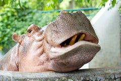 Demostración del Hippopotamus Fotografía de archivo libre de regalías