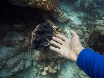 Demostración del hombre con su mano una almeja gigante bajo el agua imagen de archivo libre de regalías
