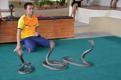 Demostración del juego del ejecutante de las serpientes con la cobra durante una demostración en un parque zoológico foto de archivo libre de regalías