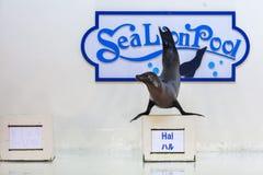 Demostración del león marino Fotografía de archivo libre de regalías